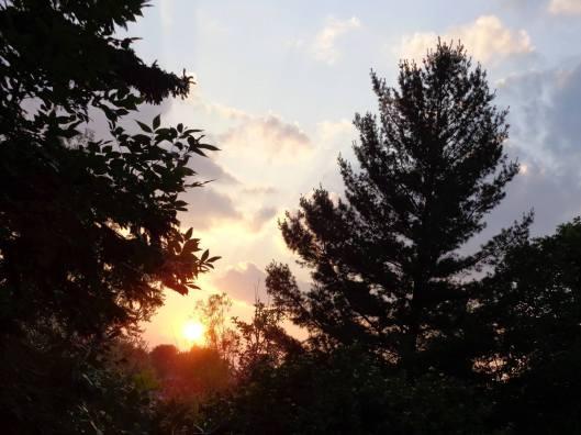 sun thru pine trees