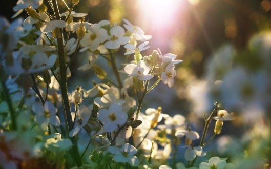 springtime_flowers_by_infinityloop